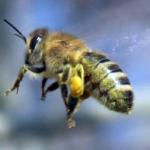 Massdöd av bin