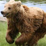 Foto: Malene Thyssen på Brunbjörn