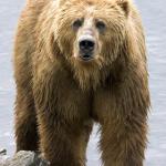 Stig Björne om Björn