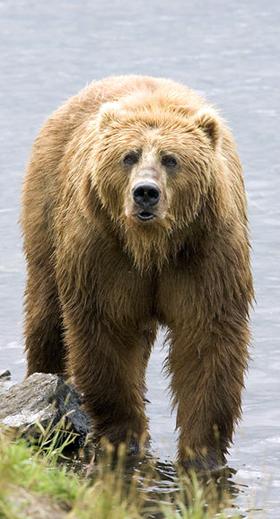 Stig Björne, inte...