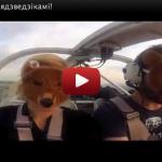 Stig Björne rapporterar löpande om 800 björnar över Minsk