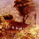 kaffeplantage